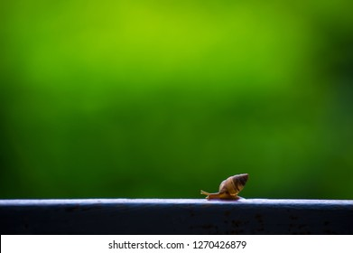 A snail is, in loose terms, a shelled gastropod. The name is most often applied to land snails, terrestrial pulmonate gastropod molluscs, snail on natural green blur background.