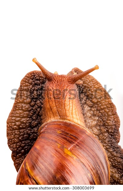 snail in isolated on white  background