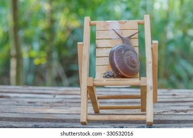 Snail lifestyle