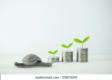 snail low speed and growing plant on row of coin money for value investment concept