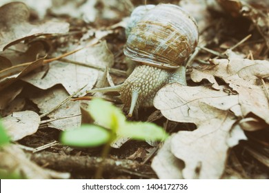 Snail macro view. Snail view. Snail nature scene. Snail photo