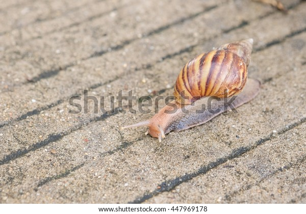 Snail move on concrete road.