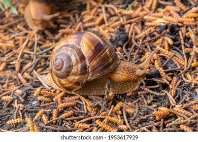 The snail moves on the wet ground, animals