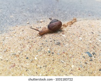 A snail with a mustache creeps along the sand