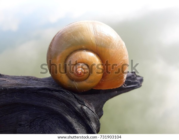 a snail on dead root over the lake in morning sunshine