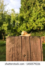 Snail on the fence, Beskydy Mountain, Czech Republic