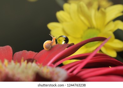 snail on flower with dew