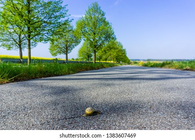 snail on the foot and bicycle path on the way to go further away. selective sharpness,