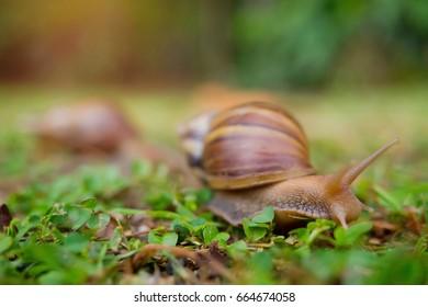 snail on ground