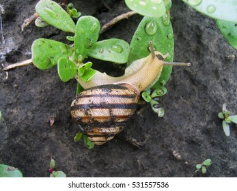 A snail on the leaf