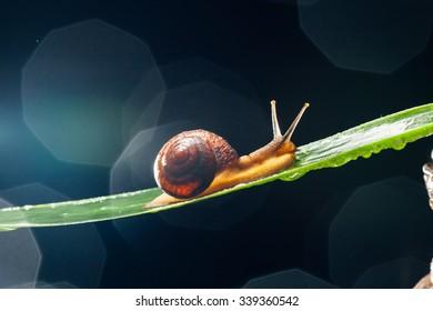 snail on the leaf against dark bokeh background