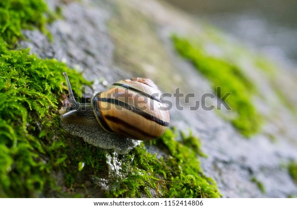 Snail on a Mossy Rock