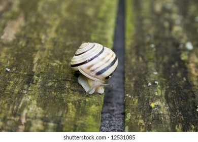 The snail on old wooden board