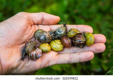Snail on the palm of a man