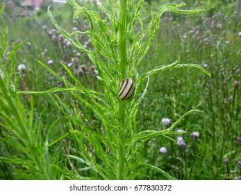 A snail on a plant