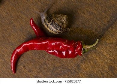 Snail on a red hot chili pepper