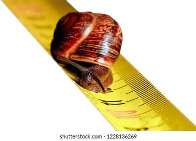 Snail on the ruler - speed and distance. Isolated.
