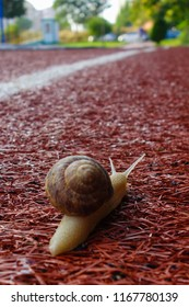 Snail on running track