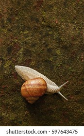 Snail on a rusty surface