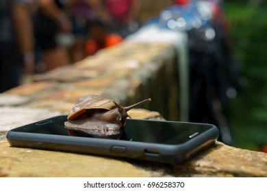 Snail on smartphone , technology fast slow concept
