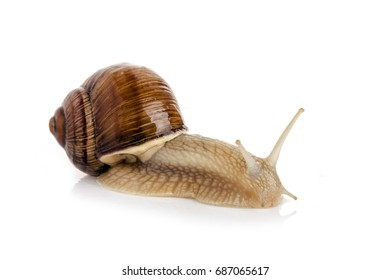 Snail on white background for isolation