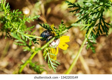 Snail on a yellow flower in spring.
