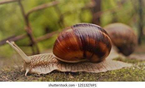 Snail Race close up