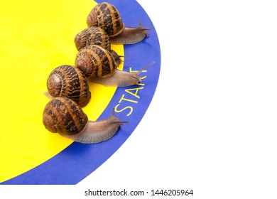 snail racing team (running, competition) slowly crawl five snails on the starting line, left, close, white background, free space for text, nobody