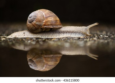 Snail reflection in a puddle after a rainstorm.