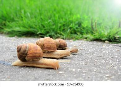 snail run