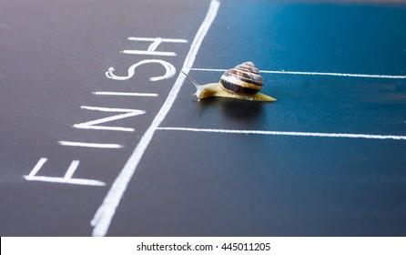 Caracol corre cerca de la línea Fin