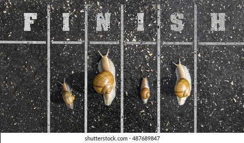 Snail run, near the Finish line, Winner sign on the ground, funny concept