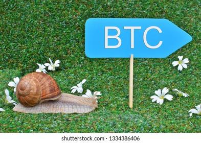 Snail rushing for BITCOIN