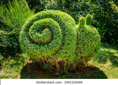 Snail shaped Boxwood Bush grows in garden. Small Bush trimmed in snail shape. Pruning Boxwood Shrub. Topiary tree