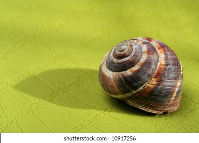 Snail shell on green surface