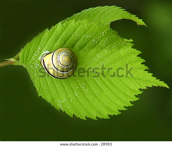 Snail shell on leaf, shallow depth of field.