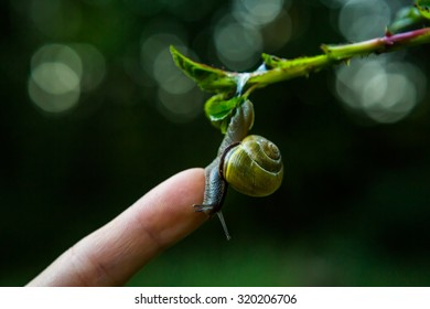 Snail sitting on a finger, ecology, protect the nature