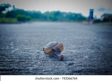 The snail are slowly moving, Concept slowly life.