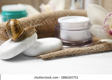 Snail, spa stones and cream on white table, closeup
