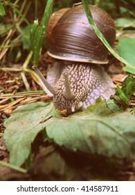 Snail in Ukraine in the city park