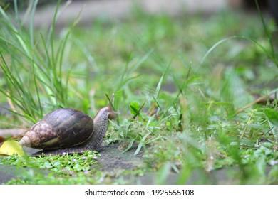 snail walk at the garden