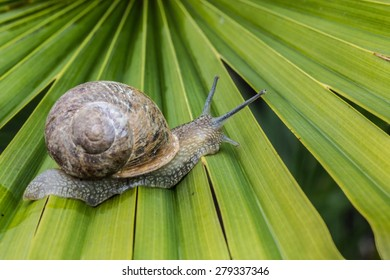 snail walking on the leaf