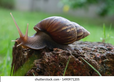 snail is walking On the red stone