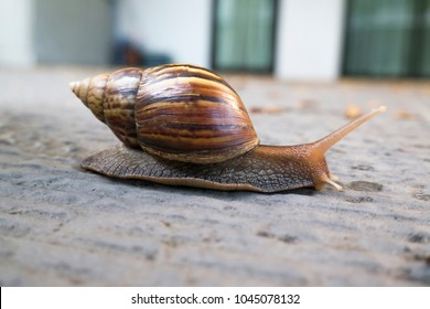 A snail is walking slowly along the path.