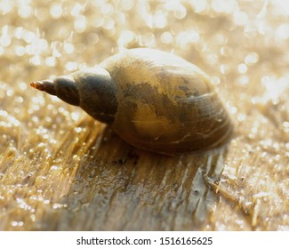 snail walks on wet wood after rain under the glare of the sun - Shutterstock ID 1516165625