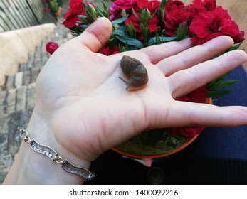 Snail without shell on the palm of a hand