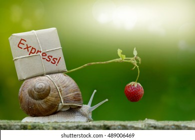 Snail-mail, snail with package on the snail shell, Express