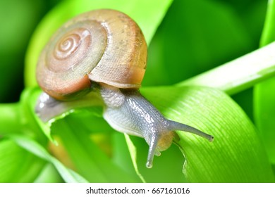 snail.More collagen for health,Symbol for slow life,Crawling snail on green background.