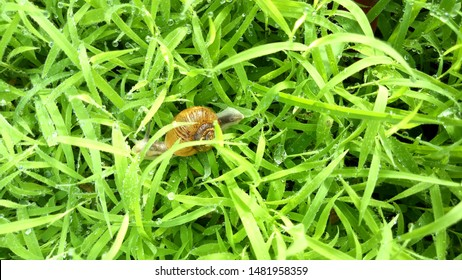 Snails are the animals in the kidneys and abdomen area. The snails have crust on their body. This is also known as conch. Snails are found without snails without shells. There are about 35,000 species