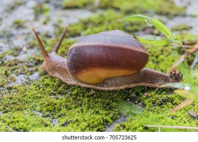 Snails are classified invertebrates. The Dallas Morning phylum. The creatures that are born in approximately the mid Carboniferous ferrous.